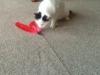 Bailey Zey playing