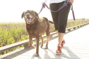 Dog Walking-Professional Services in Warrensburg, Knob, Sedalia