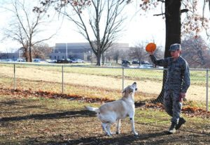 Dog Park Whiteman Air Force Base