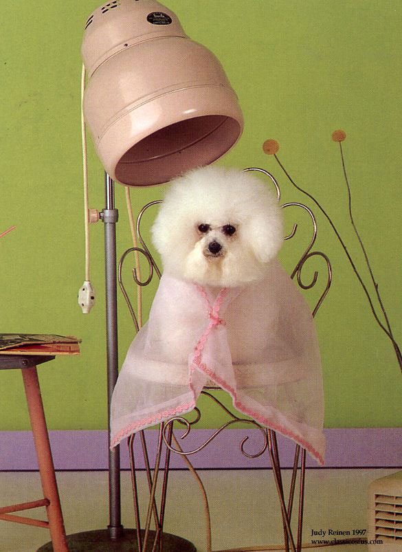 pet resource grooming- White Poodle on chair
