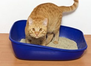 Litter box service blue box orange cat