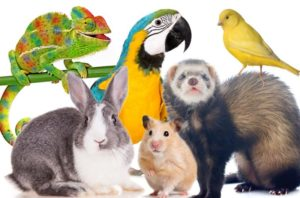 Pet Sitting Small Animal Pets