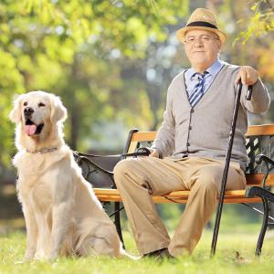 Large dog right pet for senior gentlemen