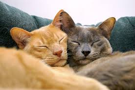 Orange and Grey Cat sleeping together