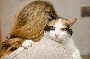 Calico Cat Lady's Shoulder