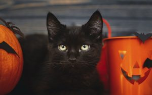 Safe Pets Halloween Black Cat