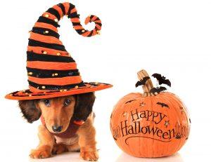 Safe Pets Affordable Dog Halloween Hat