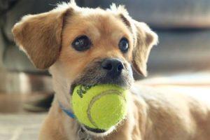 Knob Noster Pet Sitting Dog ball mouth