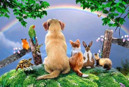 Rainbow Bridge Pets Varierty