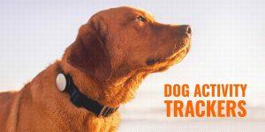 Dog Acpp Activity Tracker