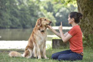 Pet Care Apps Dog Training
