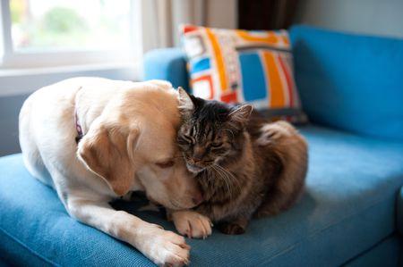 Sedalia Pet Services dog-cat together