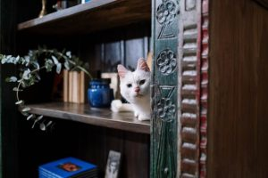White cat on shelf