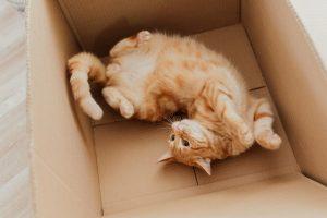 Orange cat ilaying in bottom of box