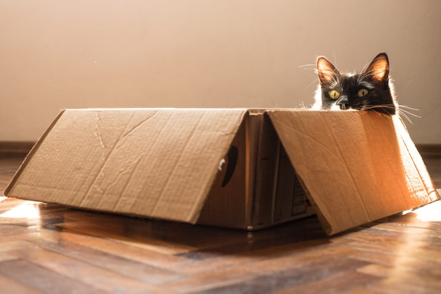 Cat hiding in box during move