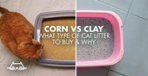 Corn and Clay Cat Litter
