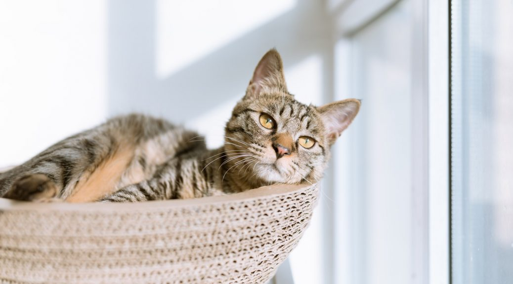 Stripe Cat New home basket