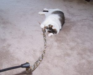 Senior Pets also like ribbon toys